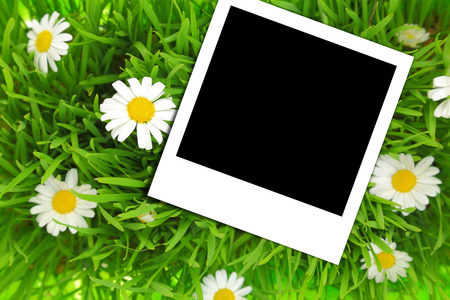 Blank photograph template on green grass with flowers photo
