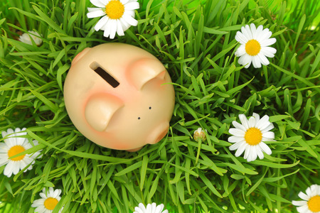 Piggy bank on green grass with flowers background  photo