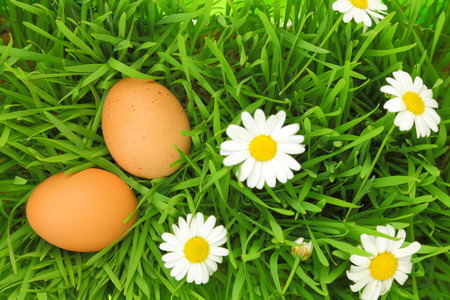 Two fresh eggs on green grass with white flowers  Stock Photo