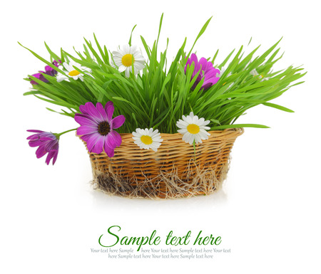 grass roots: Flowers and grass in wicker basket isolated on white