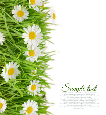 White flowers with fresh grass and copy-space  photo