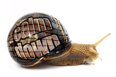 chill out: Snail with Calm Down message on its shell isolated Stock Photo
