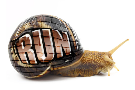 Snail with Run text written on its shell isolated photo