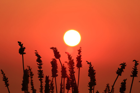 deep orange: Deep orange sun and sky with plant silhouettes in foreground Stock Photo