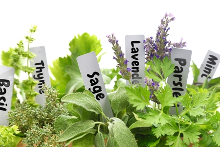 Close up of fresh herbs with name tags  photo