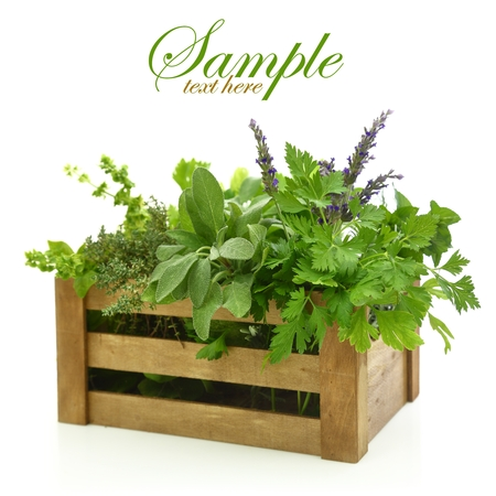 Fresh herbs in wooden box photo