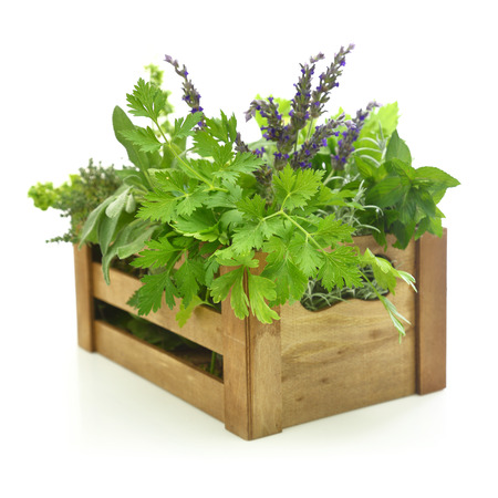 crate: Fresh herbs in wooden box Stock Photo