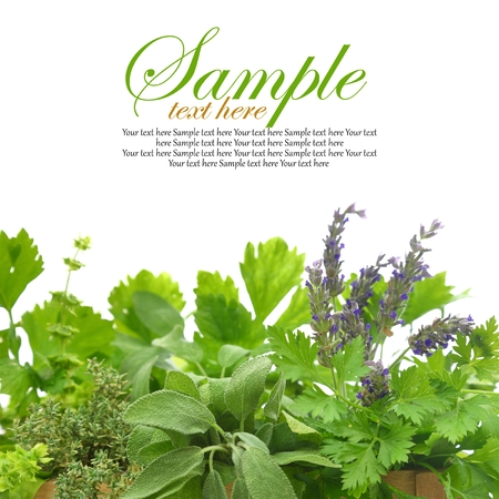 Close up of fresh herbs photo