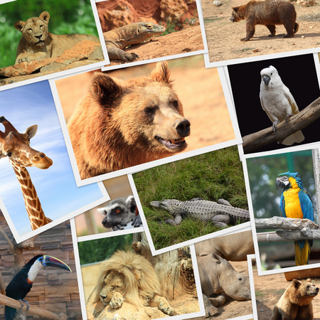 Collection of wild animals photography photo