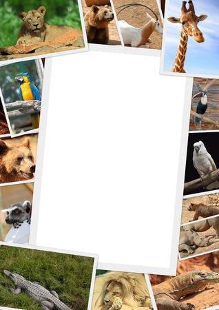 Frame with collection of wild animals photography photo