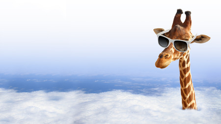 sky is the limit: Funny giraffe with sunglasses coming out of the clouds Stock Photo