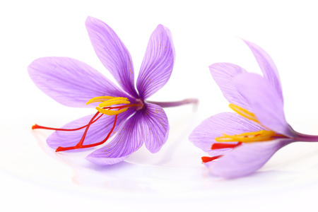 Close up of saffron flowers photo