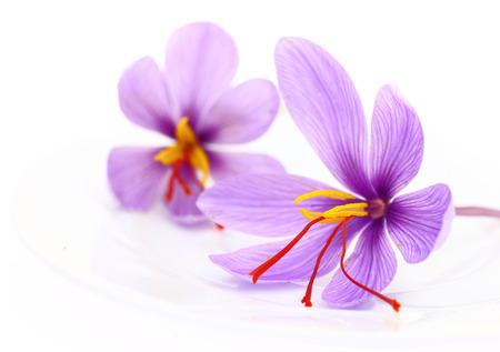 Nahaufnahme von Safran Blumen