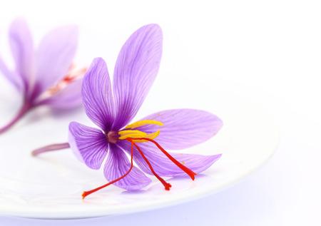 サフランの花のクローズ アップ