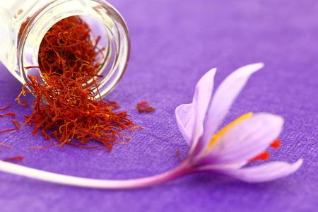 saffron: Close up of saffron flower and dried saffron spice