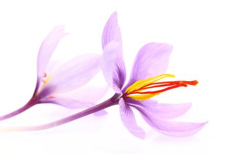 Close up of saffron flowers isolated on white background photo