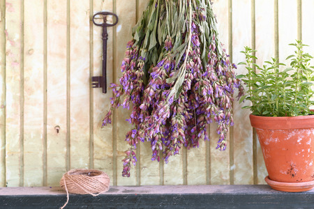 origanum: Bunch of sage and pot with herbs in front of an old wall Stock Photo
