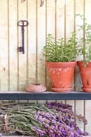 flower pot: Bunch of sage and pot with herbs in front of an old wall Stock Photo