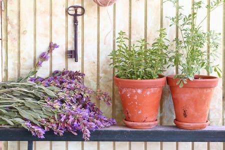 Manojo de salvia y macetas con hierbas en frente de un antiguo muro