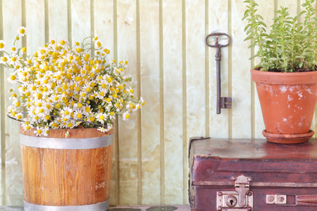 Still life with herbs and flowers retro background Stock Photo
