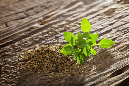 origanum: Heap of dry and branch of fresh green origanum on wooden table