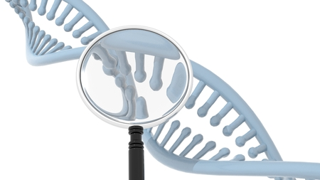 dna double helix: DNA Double Helix with magnifying glass, on white background. 3D rendering Stock Photo