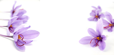Krokusblumen auf weißem Hintergrund und Kopienraum