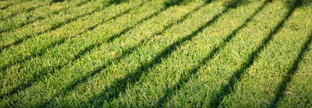 Green grass with dark shadow of banisters. Empty background, close up view with details, banner. Stock Photo