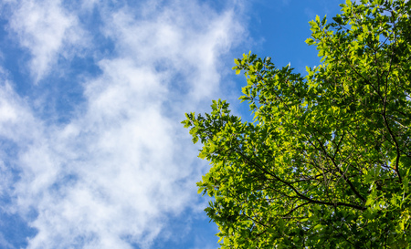 Part of evergreen tree beneath blue sky with few clouds background.