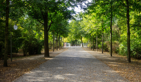 Tiergarten park with lush flora in Berlin. Autumn with falling leaves and green trees