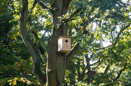 Ecological birdhouse. Beige wooden bird box with hole hanging from a tree ready to be done birds nest. Stock Photo