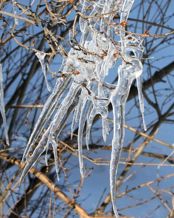 tapering: A group of icicles on a lilac bush