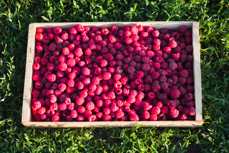 Fresh raspberries in a wooden box on a background of green grass. Ripe berries in wooden box.