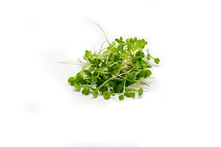 Young sprout microgreen isolated on white background. Microgreen arugula sprouts. Healthy eating concept. Reklamní fotografie