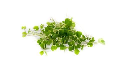 Young sprout microgreen isolated on white background. Microgreen arugula sprouts. Healthy eating concept.