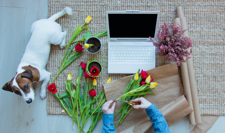 female hands wrapping bunch of tulips near laptop and dog on the carpet on the floor