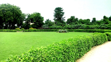 Nature green in park at Sarnath in Varanasi