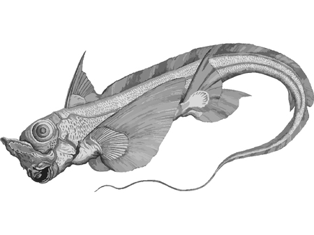 Rabbit fish, Rat fish or Chimaera Monstrosa, ugly sea monster fish vector illustration.
