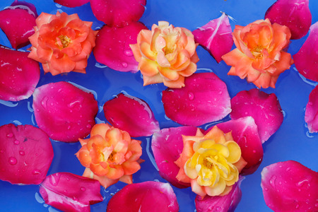 Red rose petals and yellow rose flower floting in water, blue background Imagens