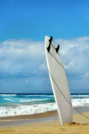laguna: Surfboard on Fuerteventura beach