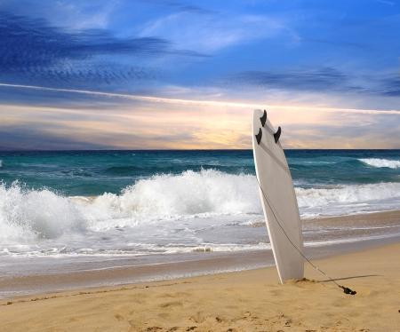 フェルテベントゥラ島のビーチにサーフボード