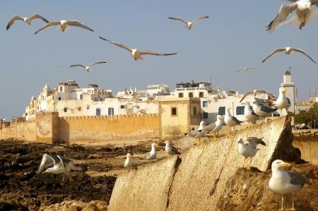avian: Avian city  Essaouira Morocco Stock Photo