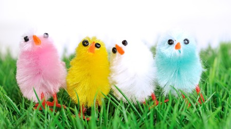 four colorful chicks against green background Stock Photo - 6976719