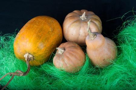 pasto sintetico: Cuatro calabazas ponen en hierba sintética verde sobre fondo negro Foto de archivo