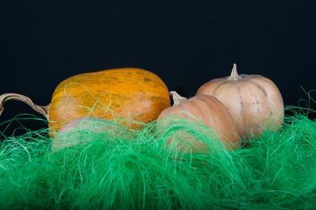 pasto sintetico: naranja árbol y calabazas de color beige que pone en hierba sintética verde sobre fondo negro