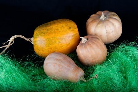 pasto sintetico: Una naranja grande y tres pequeñas calabazas de color beige cerca de césped sintético verde sobre fondo negro