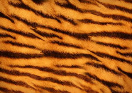 tiger skin Banque d'images