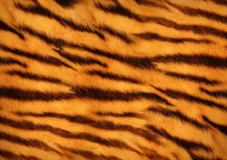 tiger skin Standard-Bild