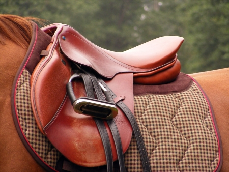 Close up of red leather saddle on the horse
