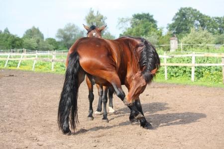 jeuken: Bruin paard bijten zich ger ontdoen van jeuk